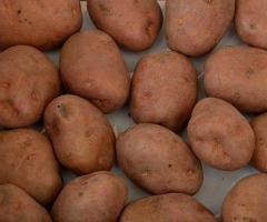 Ziemniaki ekologiczne