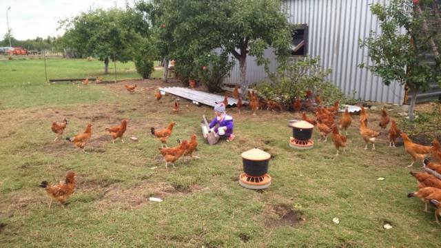 Jajka z ekologicz. chowu z dostawą pod adres