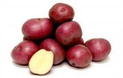 Ziemniaki czerwone ekologiczne 1kg
