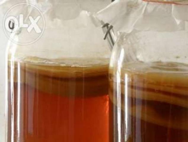 Kombucha probiotyk grzybek herbaciany