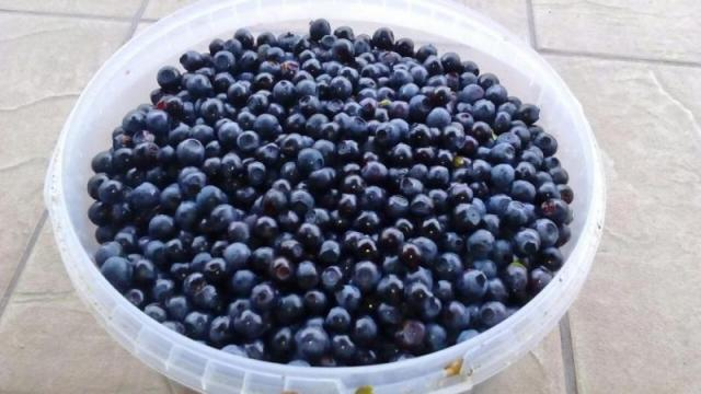Świeże jagody