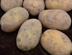 Sprzedam smaczne ziemniaki