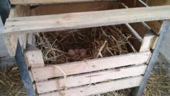 Jajka kurze od kur z wolnego wybiegu