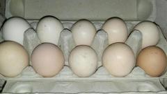 Wiejskie jaja od kurek z domowego chowu