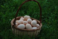 Jajka swojskie z przydomowego gospodarstwa