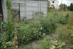 Warzywa ekologiczne: marchew, buraki, pomidory, ziemniaki