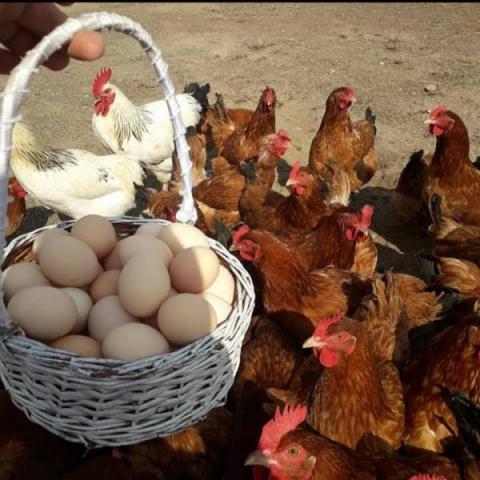 Jajka wiejskie,  dowozimy