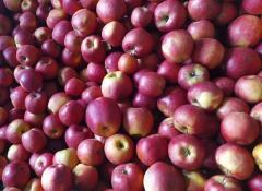 Jabłka i soki czyste bez chemii