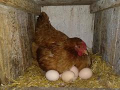 Wiejskie jajka, od Rolnika