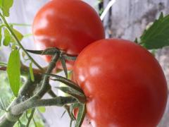 Pomidory czerwone i malinowe