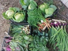Warzywa Ekologiczne marchew, Buraki, Por, Cebula, cukinia ziemniaki, Pietruszka ,