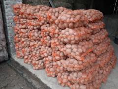 Ziemniaki Bellarosa z wlasnego gospodarstwa