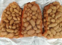 Ziemniaki z własnego gospodarstwa 15kg-10zł